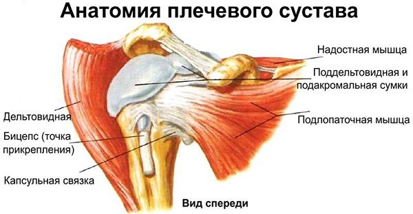 Остеохондроз плечевого сустава лечение народными средствами